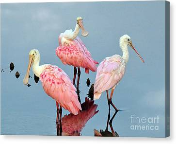 Canvas Print featuring the photograph A Family Gathering by Kathy Baccari