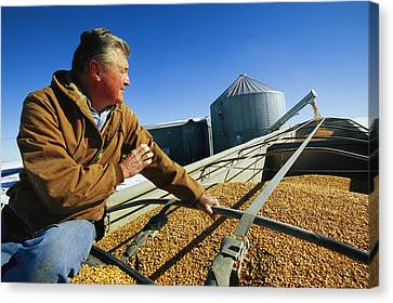 A Farmer Watches As His Corn Is Augered Canvas Print by Joel Sartore