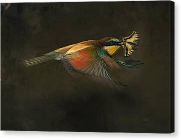 A Female Bee Eater Plucks A Butterfly Canvas Print by Joe Petersburger
