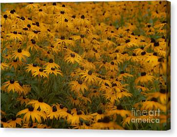 A Field Full Of Flowers Canvas Print by Michael Rucci