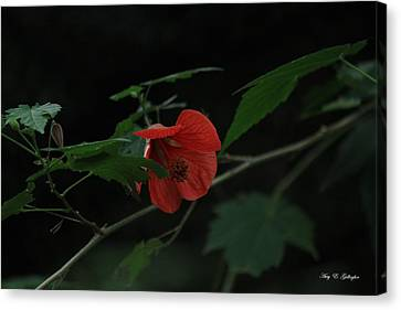 Canvas Print featuring the photograph A Flame Among The Darkness by Amy Gallagher