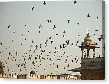 A Flock Of Pigeons Crowding One Of The Structures On Top Of The Red Fort Canvas Print by Ashish Agarwal