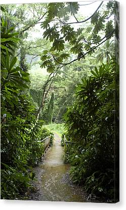A Flooded Path At Manoa Falls Canvas Print by Stacy Gold