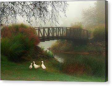 A Foggy Morning Canvas Print by Tom York Images
