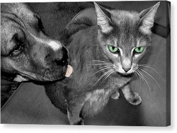 A Forbidden Love  Canvas Print by Juliana  Blessington