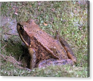 A Friendly Frog Canvas Print by Chalet Roome-Rigdon