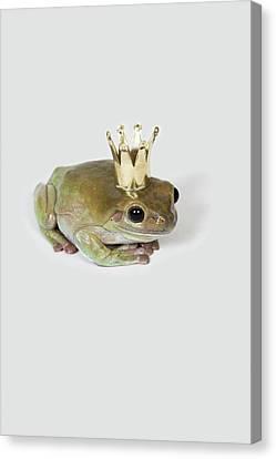 A Frog Wearing A Crown, Studio Shot Canvas Print by Paul Hudson
