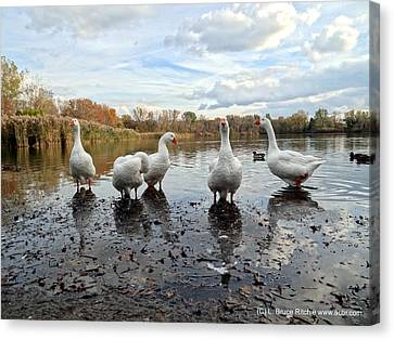 A Gaggle Of Geese 1 Canvas Print