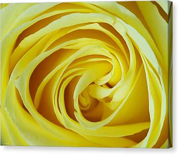 A Grandmother's Love Canvas Print by Lauren Radke
