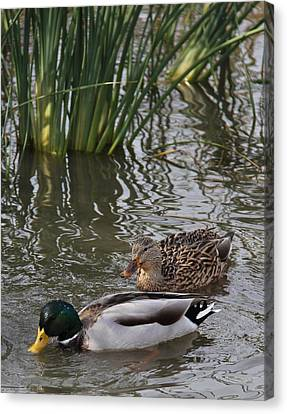 A Handsome Couple Canvas Print by Frank Wickham