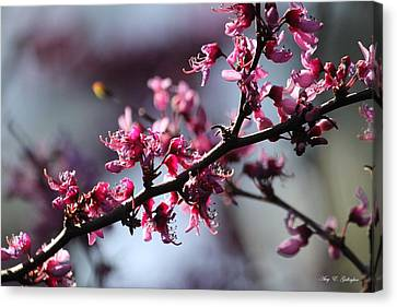 Canvas Print featuring the photograph A Hint Of Spring  by Amy Gallagher