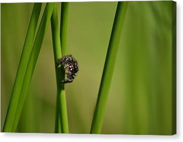 Canvas Print featuring the photograph A Jumper In The Grass by JD Grimes