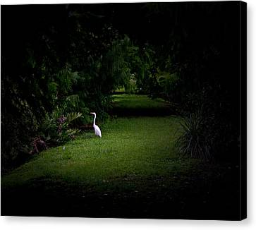 A Light In The Forest Canvas Print by Mark Andrew Thomas