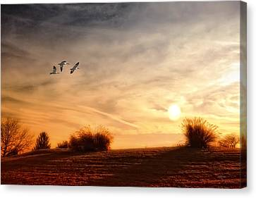 A Little Peace Canvas Print by Tom York Images