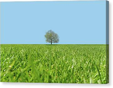 A Lone Tree In A Field Canvas Print by Richard Newstead
