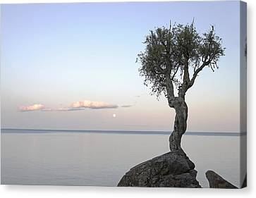 A Lone Tree On Lake Superior Grand Canvas Print by Susan Dykstra