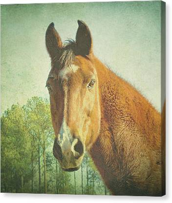 Canvas Print featuring the photograph A Loving Soul by Robin Dickinson