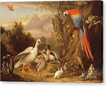 A Macaw - Ducks - Parrots And Other Birds In A Landscape Canvas Print