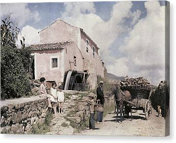 A Man Transports Wood In Terceira Canvas Print by Wilhelm Tobien