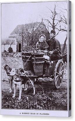 A Market Team In Flanders. Two Dogs Canvas Print by Everett