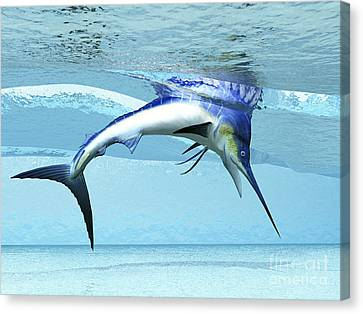 A Marlin Dives In Shallow Waves Looking Canvas Print by Corey Ford