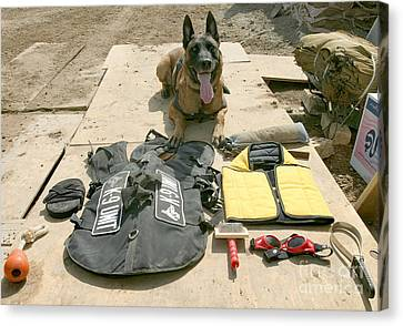 A Military Police Dog Sits Canvas Print