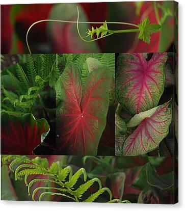 A Mosaic Of Red And Green Calladium Leaves Canvas Print