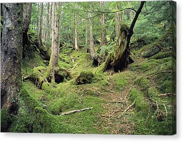 A Mossy Woodland View On Queen Canvas Print by Bill Curtsinger