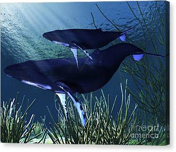 A Mother Humpback Whale Swims Canvas Print by Corey Ford