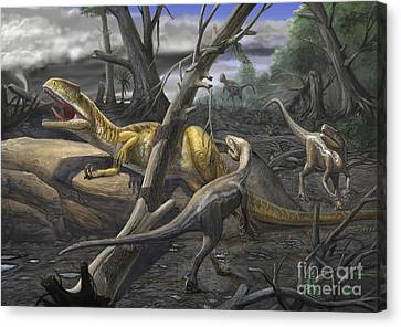 A Neovenator Salerii Is Approached Canvas Print by Sergey Krasovskiy