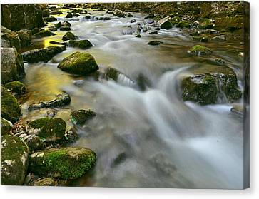 A Painted Stream Canvas Print by Jeff Rose