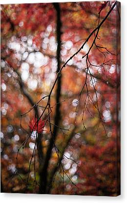 Red Leaf Canvas Print - A Pair by Mike Reid