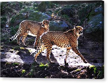 A Pair Of Cheetah's Canvas Print by Bill Cannon