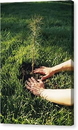 A Pair Of Hands Gently Tamp Soil Canvas Print by Scott Sroka