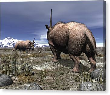 A Pair Of Male Elasmotherium Confront Canvas Print by Walter Myers