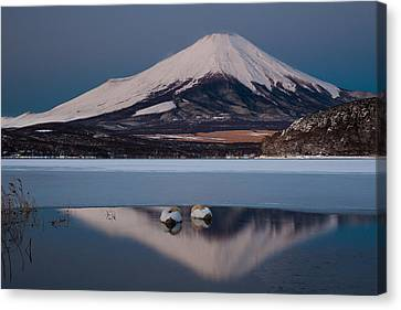 A Pair Of Mute Swans In Lake Kawaguchi In The Reflection Of Mt Fuji, Japan Canvas Print by Mint Images/ Art Wolfe