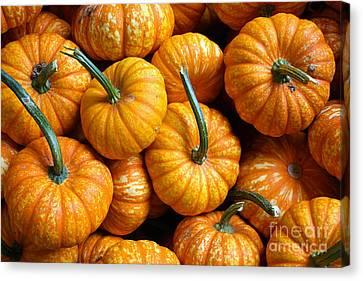 A Peck Of Pumpkins Canvas Print by Kami McKeon
