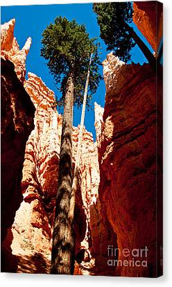 A Place To Grow Canvas Print by Bob and Nancy Kendrick