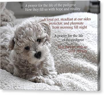 A Puppy's Prayer Canvas Print by Lisa  DiFruscio