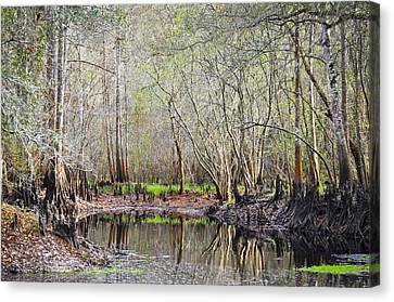 A Quiet Back Woods Place Canvas Print by Carolyn Marshall