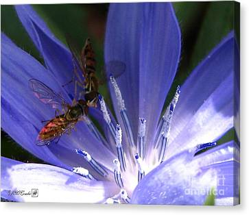 Canvas Print featuring the photograph A Quiet Moment On The Chicory by J McCombie
