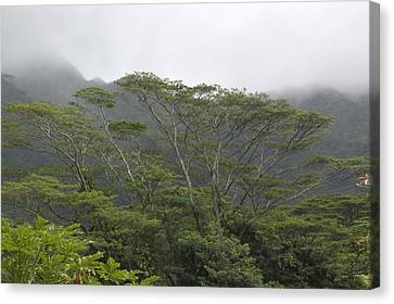 A Rainforest In Honolulu, Hawaii Canvas Print by Stacy Gold