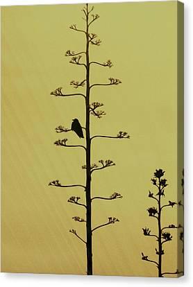A Raven's Rest Canvas Print by James Mancini Heath