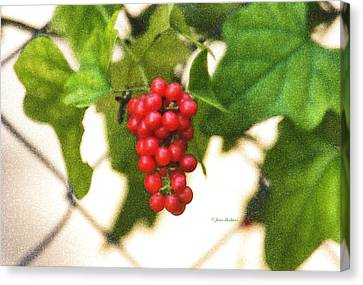 Canvas Print featuring the photograph A Red Cluster by Joan Bertucci