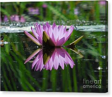 A Reflection Of A Fuchsia Water Lily Canvas Print by Chad and Stacey Hall