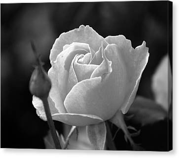 Canvas Print featuring the photograph A Rose In Black And White by Janice Adomeit