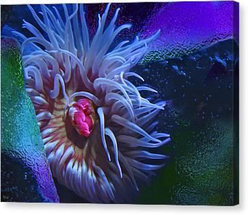A Sea Anemone Canvas Print by Natalya Shvetsky