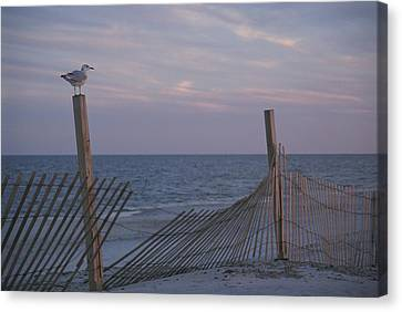 A Seagull Pauses Canvas Print by Stacy Gold