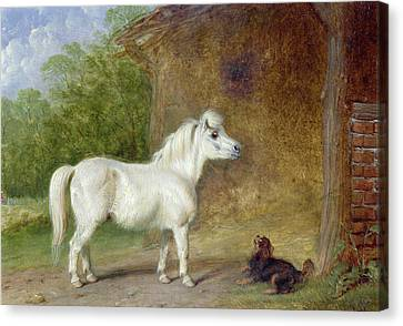 A Shetland Pony And A King Charles Spaniel Canvas Print by Martin Theodore Ward