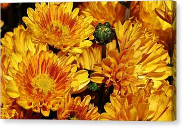 A Sign Of Fall Canvas Print by Bruce Bley